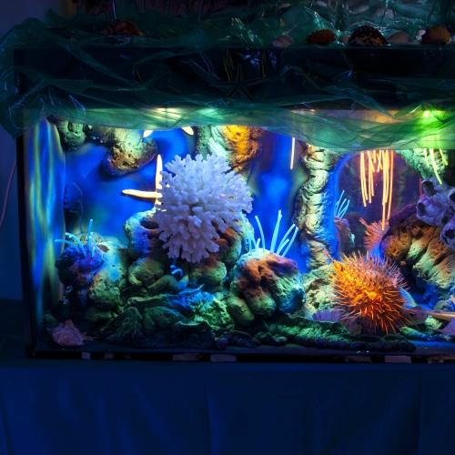 Magiczne akwarium